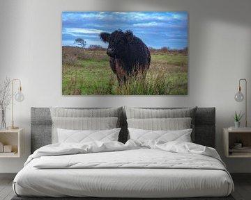 Grazende koe op Texel van Dick Hooijschuur