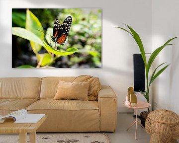 vlinder op blad von Tom Poelstra