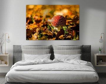 Grote paddenstoel rood met witte stippen van Gijs Rijsdijk