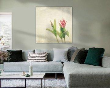 Tulip van Inge Berken