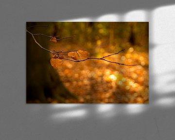 Herfstbladeren in De Horsten in Wassenaar van Birgitte Bergman