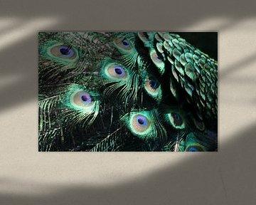 Pauwen veren van Monique Struijs