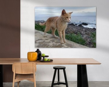 Kat op muurtje (staand) met zee zicht