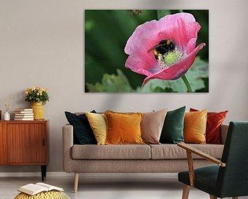 Biene auf einer Mohnblume  von Cora Unk
