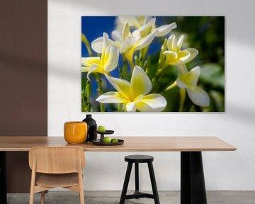 Weiße Blumen und ein blauer Himmel von Nathan Okkerse