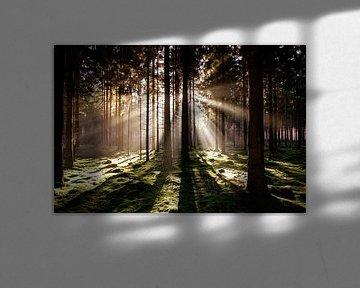 Zonsondergang in bos.