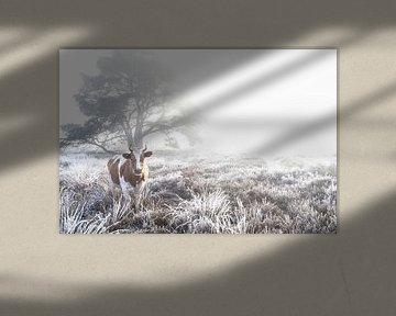 Koe in de mist.  van Rens Zwanenburg