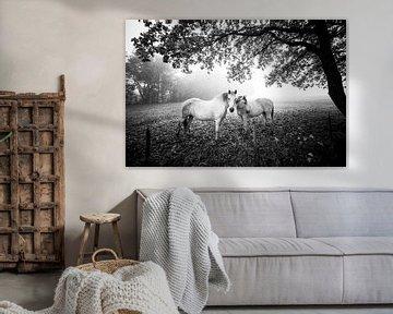 Paarden in de mist. van Rens Zwanenburg