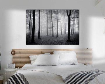 Herfst bos.  van Rens Zwanenburg