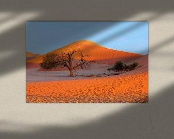 Rode duinen, Namibwoestijn