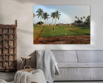 Landschap in de tropen van Cora Unk
