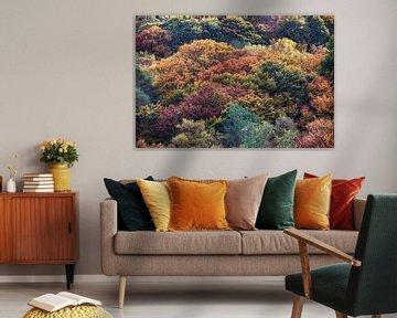 Boomtoppen in herfstkleuren van Portrait of Holland
