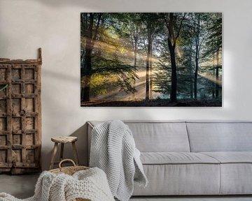 Zonnestralen in het Bos (1) sur Portrait of Holland