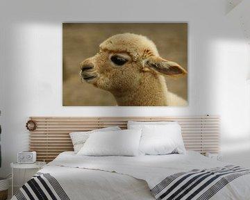 Baby Alpaka von Cora Unk