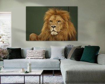Lion oder Panthera leo von Cora Unk