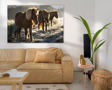 Paarden op de Posbank van Martin Podt