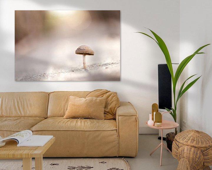 Sfeerimpressie: Een paddenstoeltje in het eerste zonlicht van de dag van Fotografie Krist / Top Foto Vlaanderen