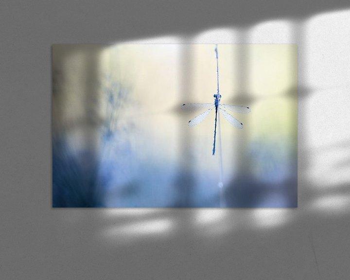 Sfeerimpressie: Waterjuffer van Judith Borremans