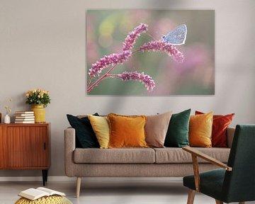 Blauw vlindertje op roze takje sur Judith Borremans