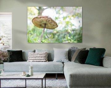Oude paddenstoel van Tess Smethurst-Oostvogel