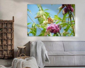 Vlinder van Tess Smethurst-Oostvogel