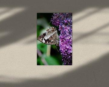 Vlinder von Tess Smethurst-Oostvogel