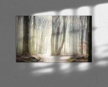 Wunderland Wald von Fabrizio Micciche