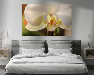 ORCHIDEE von Eugene Lentjes