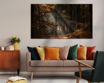Herfstkleuren en zonnestralen in een bos van Bram van Broekhoven