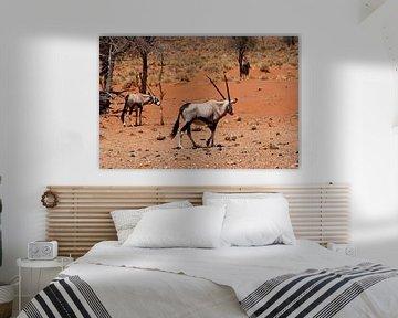 Gemsbokken Namibië van Inge Hogenbijl