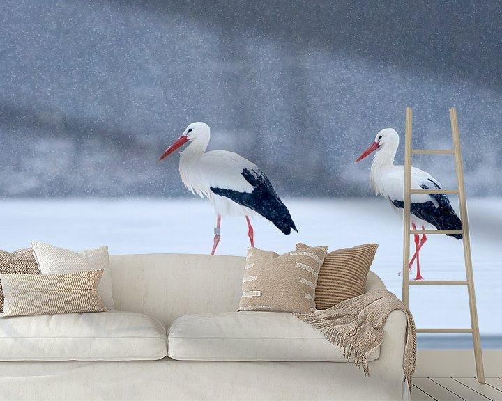 Impression: 2 White Storks standing on ice during snow sur Remco Van Daalen