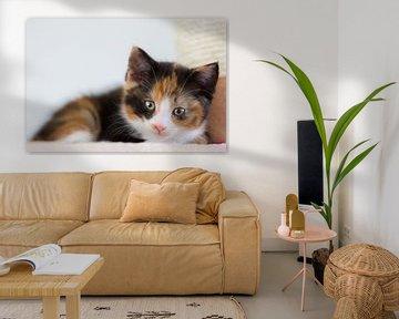 Kitten von Elma van Putten