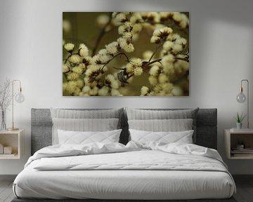 Winterbloem bruin van Koos Iperen