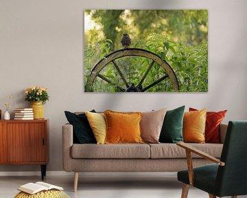 Steenuil op wagenwiel van Jan Dolfing