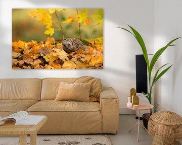 Egel in herfstsfeer van Jan Dolfing