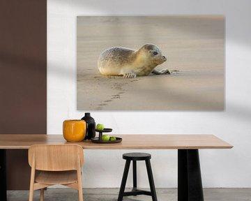 Rustende gewone Zeehond van Remco Van Daalen