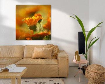 the orange crown van bob van den berg