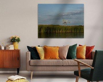 Windwijzer boven het riet van Michel Aalders