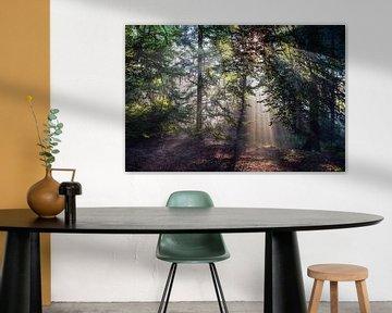Zonnestralen in het Bos (2) sur Portrait of Holland