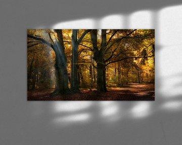 Zonnestralen in een herfst bos von Bram van Broekhoven