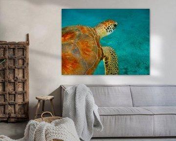 Zeeschildpad van Victor Droogh