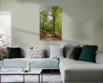 Staand panorama bospad met zitbank in het Spanderswoud, 's-Graveland, Wijdemeren, Netherlands van Martin Stevens