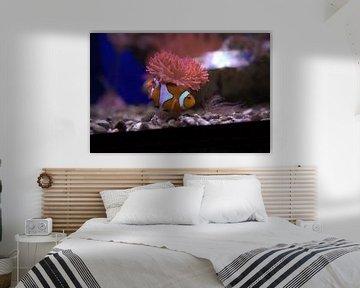 Vissen van Fred Roland