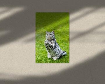 Getigerte Katze sitzt auf grünem Gras zu beten von Ben Schonewille