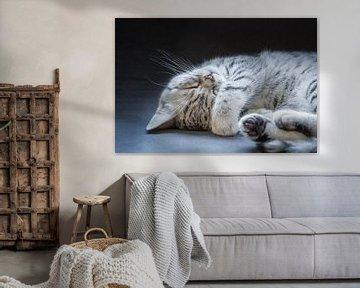 Schwarz Silber Tabby kätzchen liegt schläfrig und faul sur Ben Schonewille