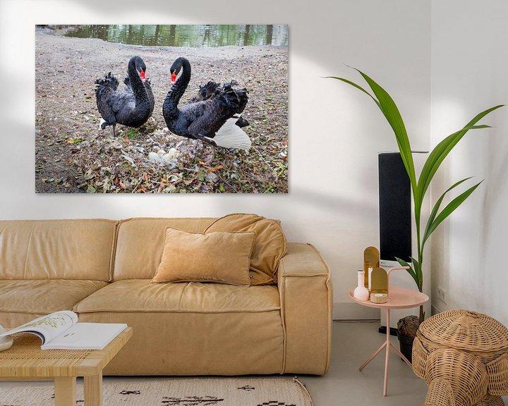 Sfeerimpressie: Koppel zwarte zwanen met eieren in nest. van Ben Schonewille