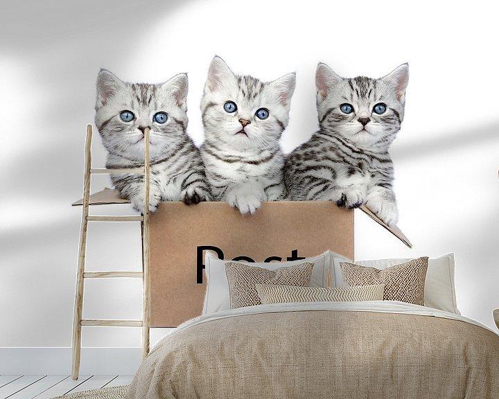 Beispiel fototapete: Drei junge Silber Tabby Kätzchen in einem Box von Ben Schonewille
