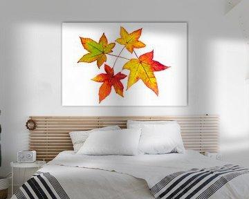 Rot gelb orange Blätter im Herbst Saison auf weißem Hintergrund sur Ben Schonewille