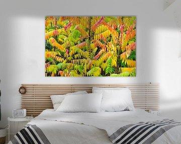 Velvet Bäume mit verschiedenen Farben im Herbst Saison von Ben Schonewille