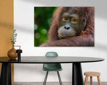 Orang-Utan Porträt sur Richard Guijt Photography